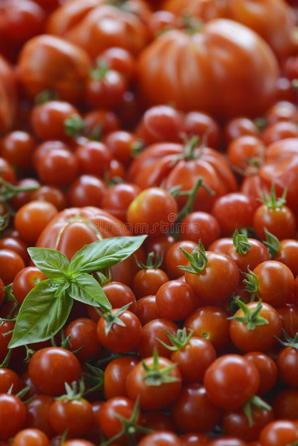 与蓬蒿叶子的蕃茄背景 免版税库存照片