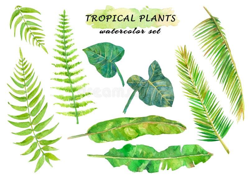 与蕨、coconat、香蕉和藤本植物叶子的水彩热带集合 皇族释放例证
