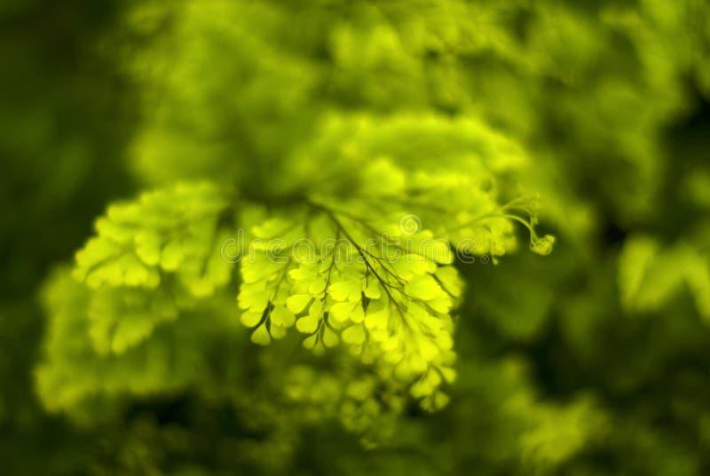 与蕨小树枝的被弄脏的绿色花卉背景  免版税图库摄影