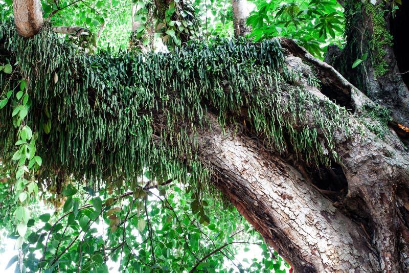 与蕨的树干 库存图片