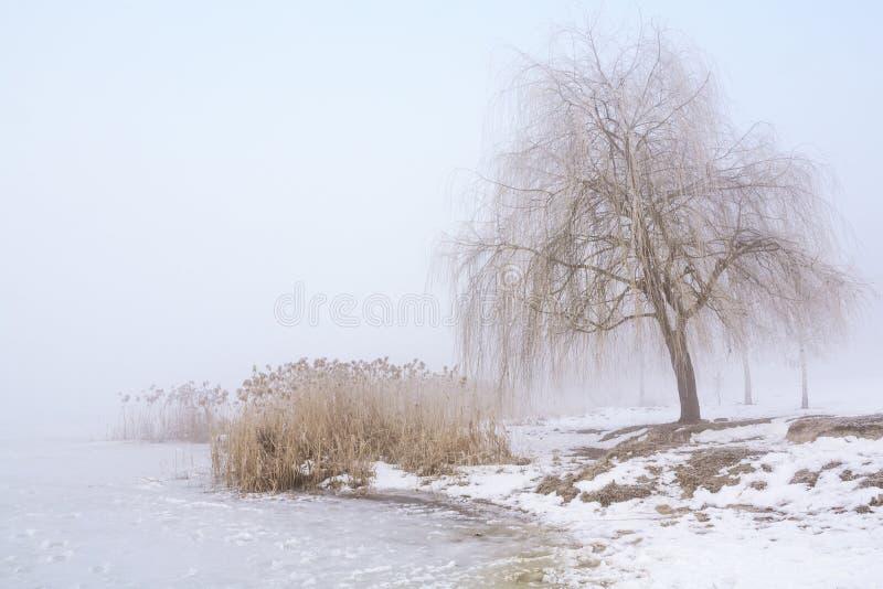 与薄雾的冬天风景 库存照片