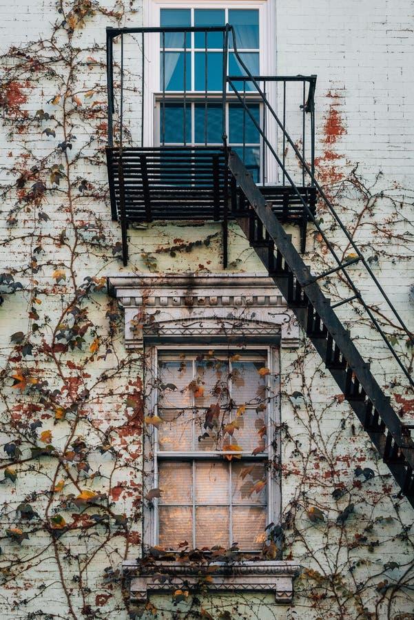 与藤的防火梯在一个大厦在东方村庄,曼哈顿,纽约 免版税库存图片