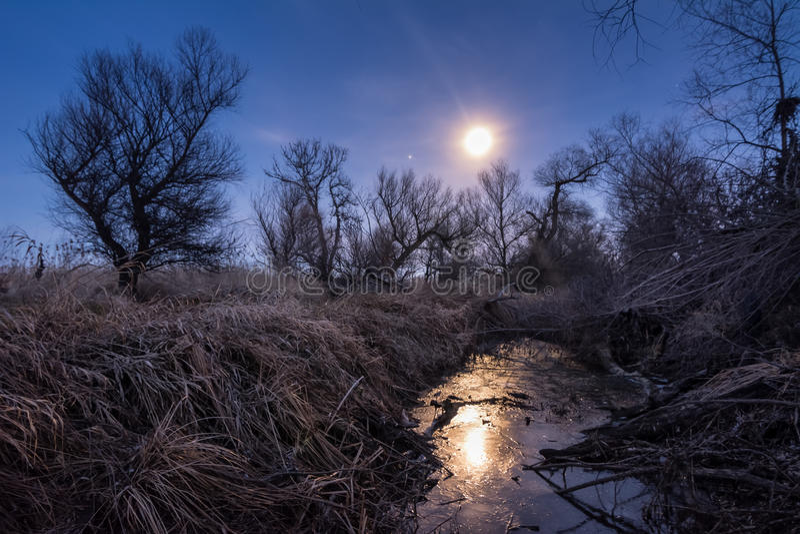 与藤茎和树silhoettes的异常的满月夜 库存图片