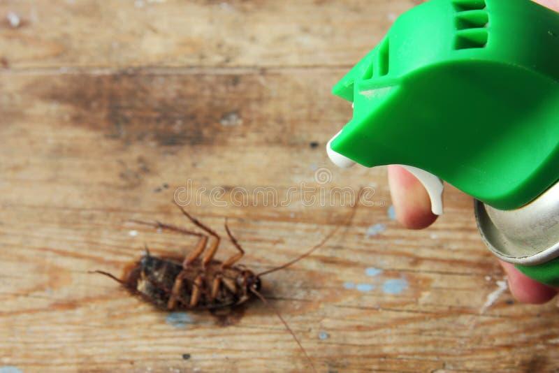 与虫驱除剂的杀害蟑螂 库存照片