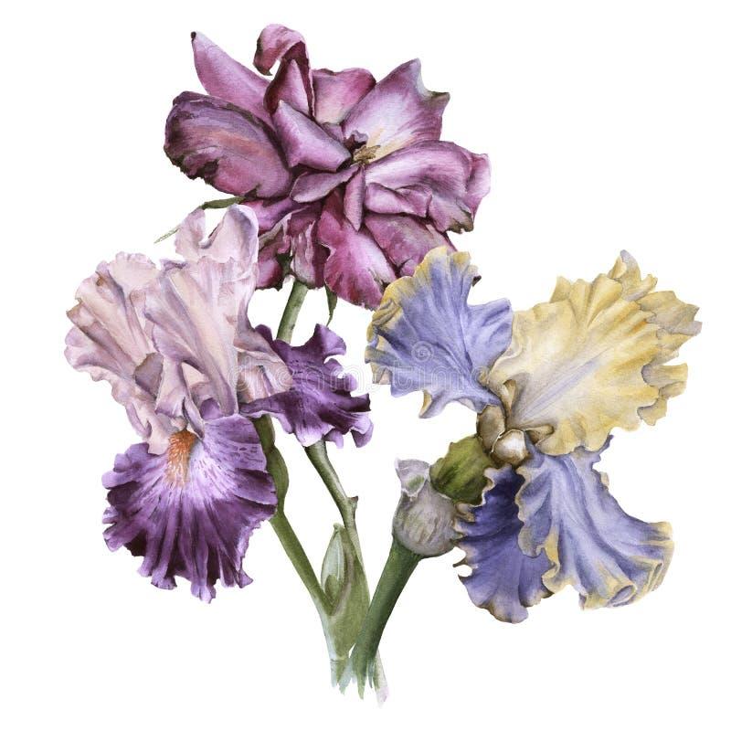与虹膜和茶花的花束上升了 背景查出的白色 皇族释放例证