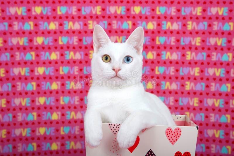 与虹膜异色症爪子的白色小猫在华伦泰` s箱子的边 免版税库存图片