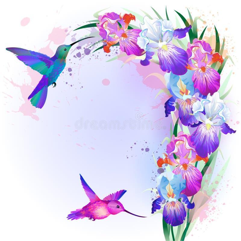 与虹膜花和蜂鸟的传染媒介卡片 向量例证