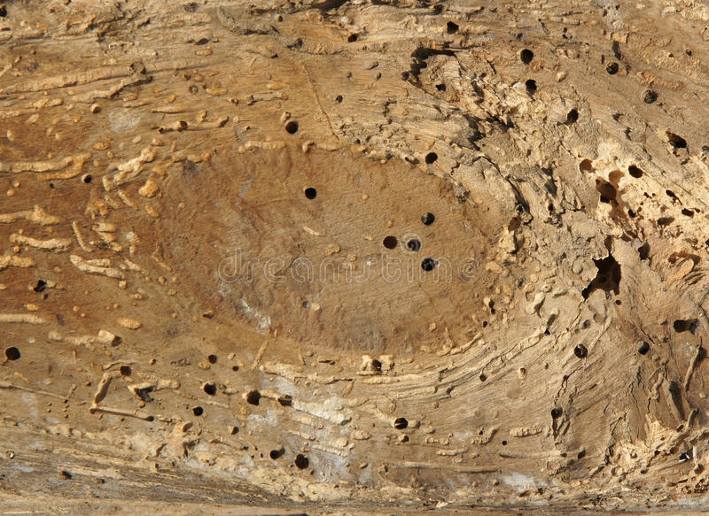 与蚀船虫孔的老日志 库存图片