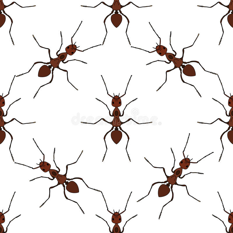 与蚂蚁的无缝的样式 胶木exsecta 向量 库存例证