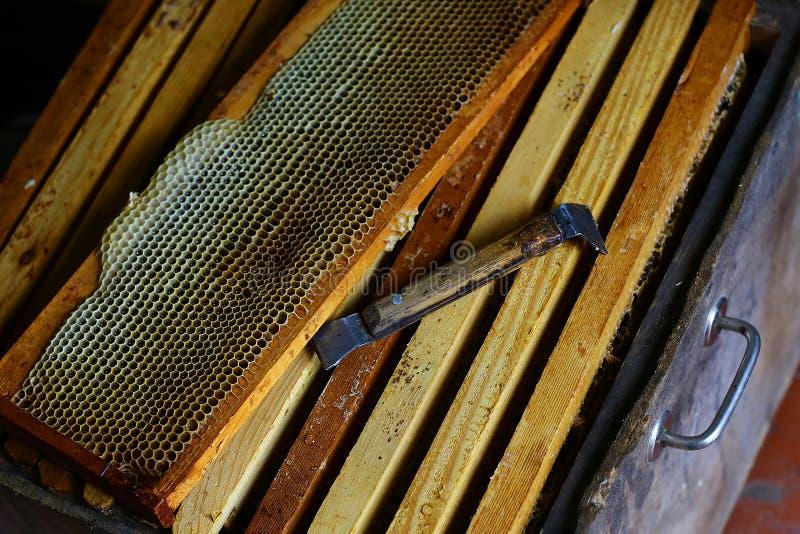 与蜂充分蜡结构的框架在蜂窝的新鲜的蜂蜂蜜 为养蜂业和蜂蜜辅助部件的工具 地道lifesty 免版税图库摄影