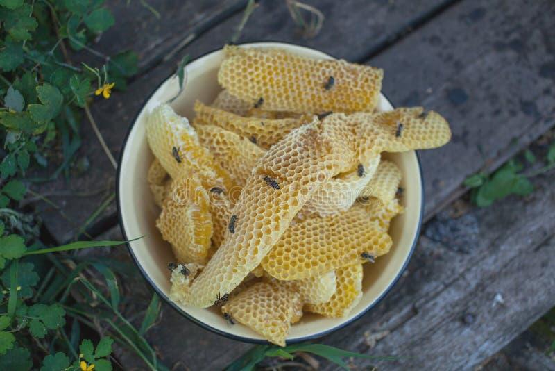 与蜂和蜂蜜的蜂窝 蜂房的蜂农 免版税库存照片