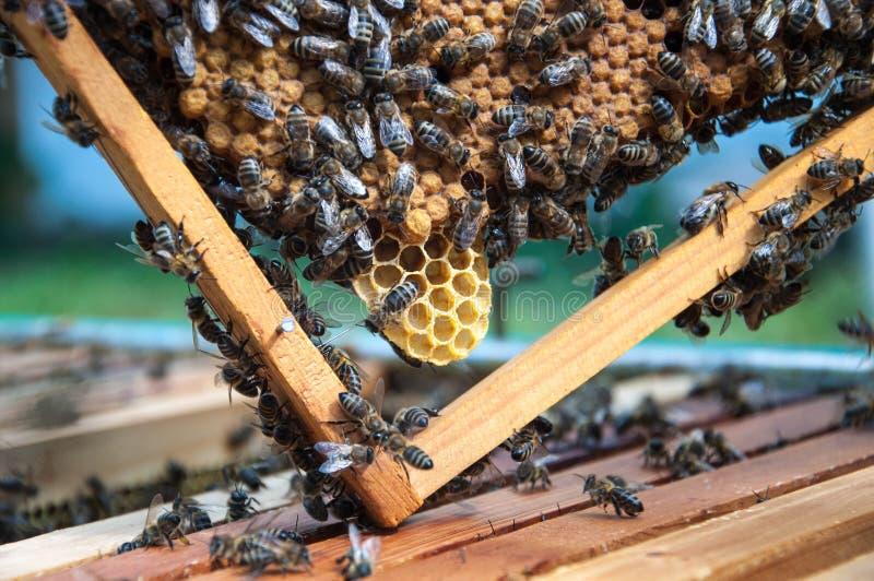 与蜂的蜂框架 库存图片