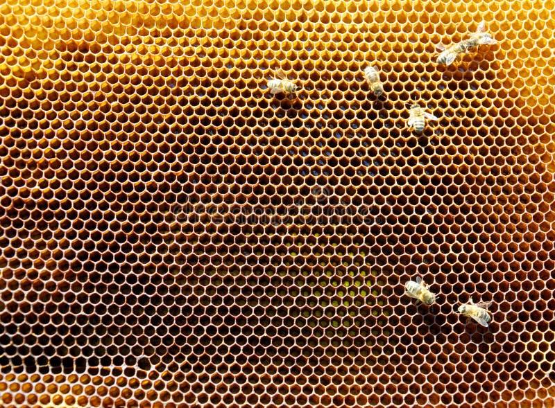 与蜂的蜂框架 免版税图库摄影