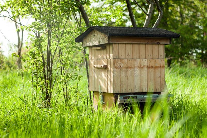 与蜂的蜂箱在庭院里 蜂回家 库存照片