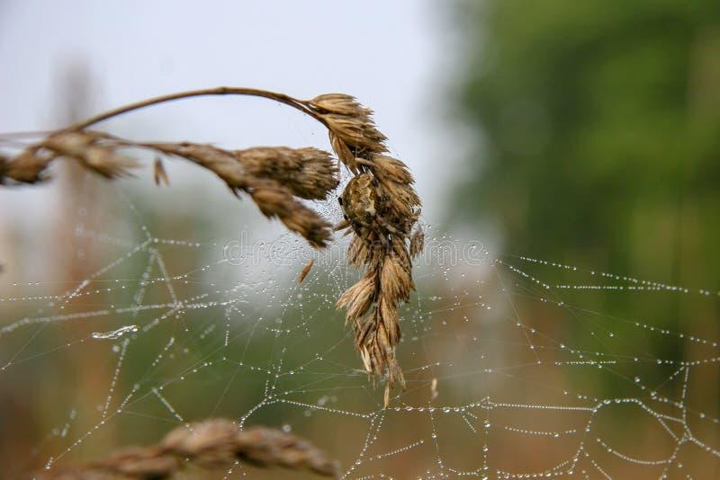 与蜘蛛的蜘蛛网在小尖峰有被弄脏的背景 免版税图库摄影