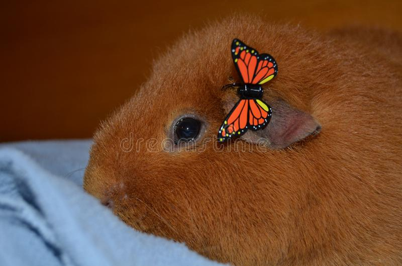 与蝴蝶夹子的试验品 图库摄影