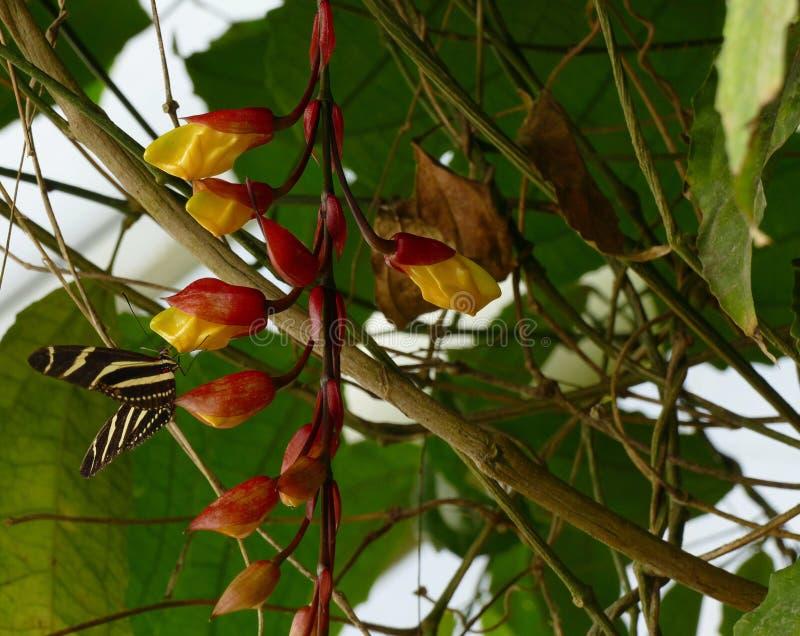 与蝴蝶的兰花 免版税图库摄影