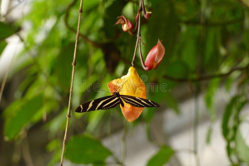 与蝴蝶的兰花 图库摄影