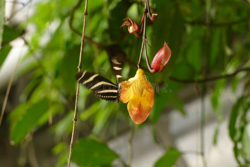 与蝴蝶的兰花 免版税库存图片