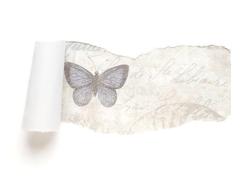与蝴蝶的空白被撕毁的纸背景 库存照片