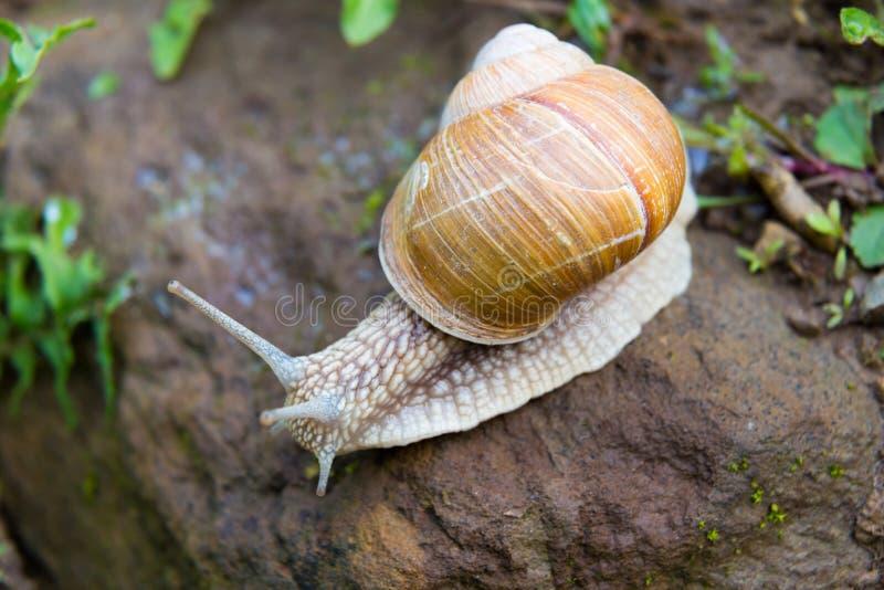 与动物鞘的腹足蜗牛蚊子的软体动物家里有像螺旋一样的小虫图片