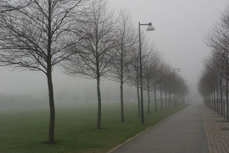 与街灯和树的一有薄雾的roud 免版税库存照片