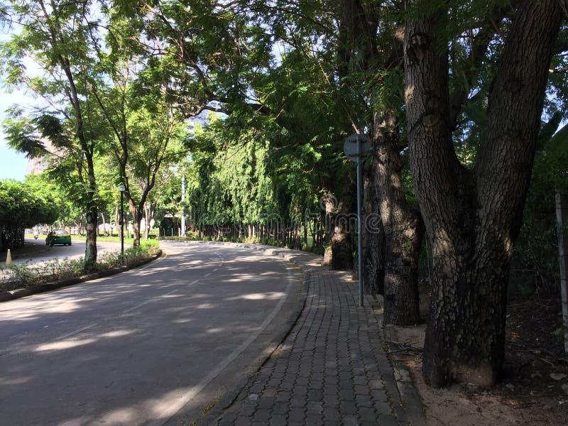 与街道的树在庭院 库存照片