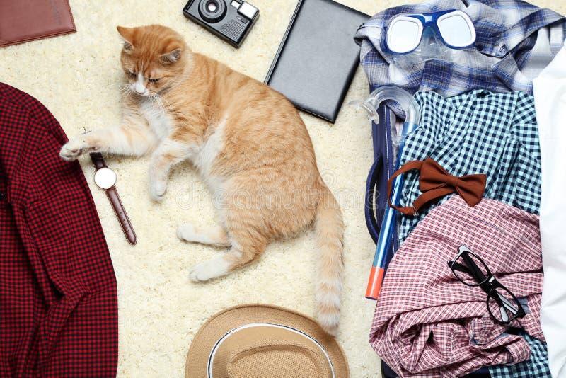 与衣裳的姜猫 免版税库存照片