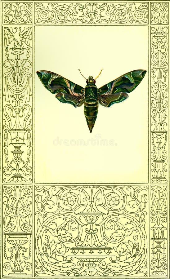 与表面的逗人喜爱的构成的绿色蝴蝶 库存图片