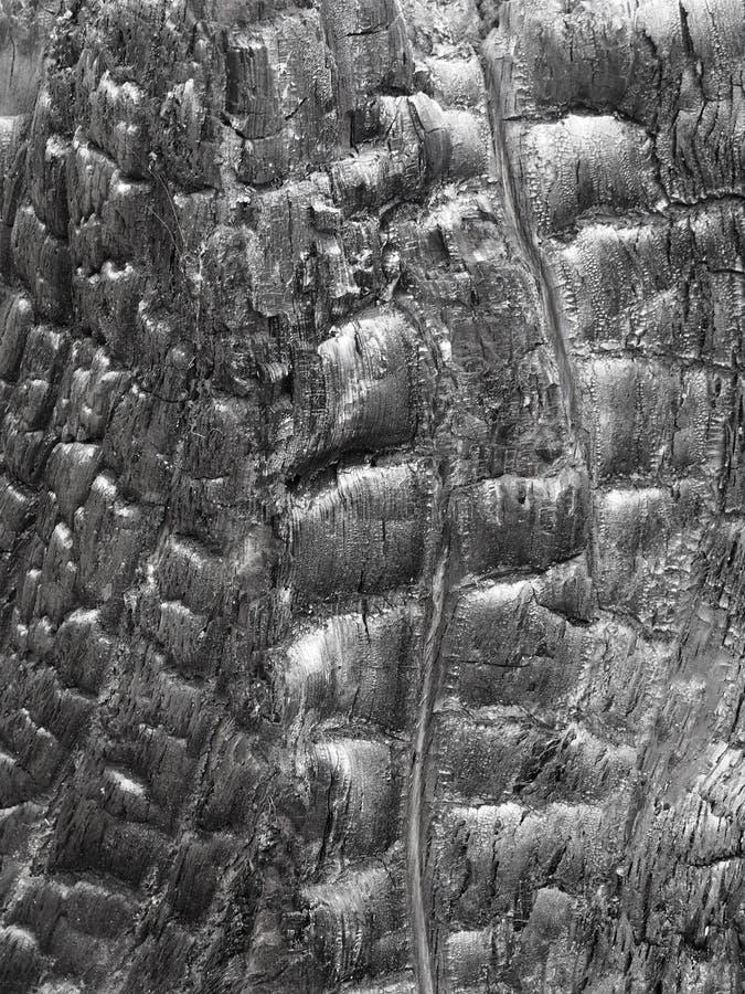 与被仿造的五谷和煤炭作用的发光的黑织地不很细被烧焦的黑木头 免版税库存图片