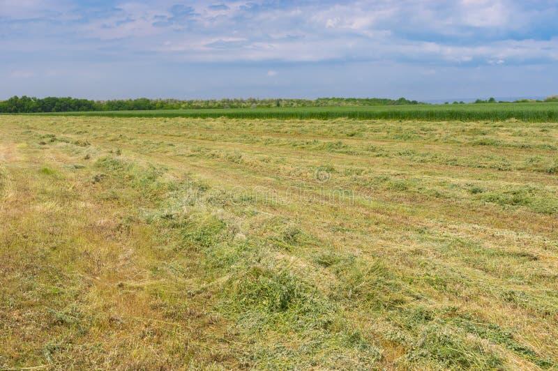 与被割的干草行的春天风景在水草甸的 库存图片