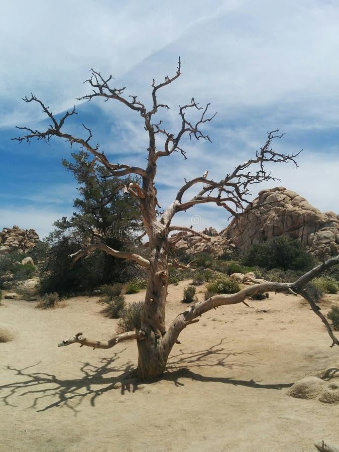 与被堆积的冰砾小山的多节老死的树在沙漠 图库摄影