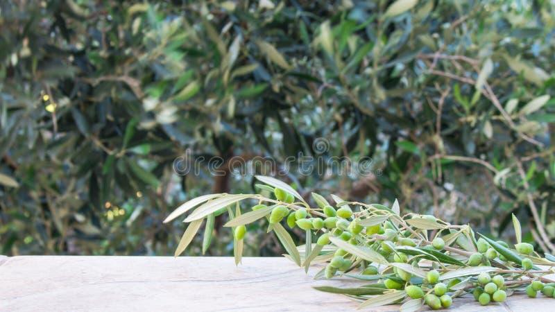 与被弄脏的橄榄树背景模板的空的石桌产品显示的  库存照片