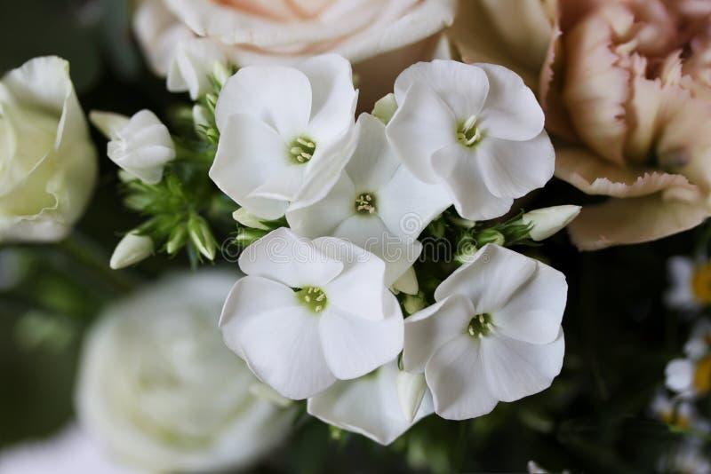 与被弄脏的玫瑰的美丽的小白色兰花花在背景-关闭中 免版税库存照片