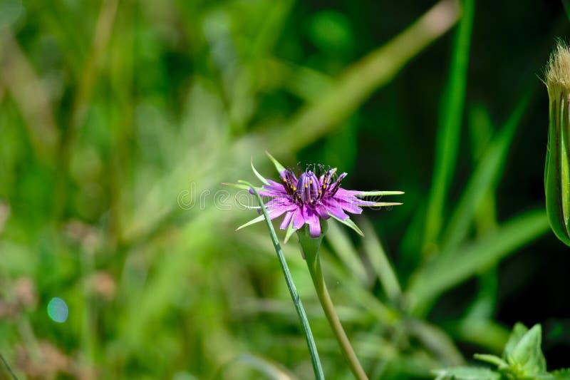 与被弄脏的背景关闭的紫色花图片 库存照片