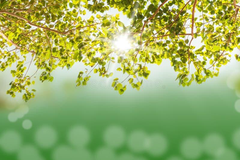 与被弄脏的轻的bokeh和阳光的绿色树 免版税库存图片