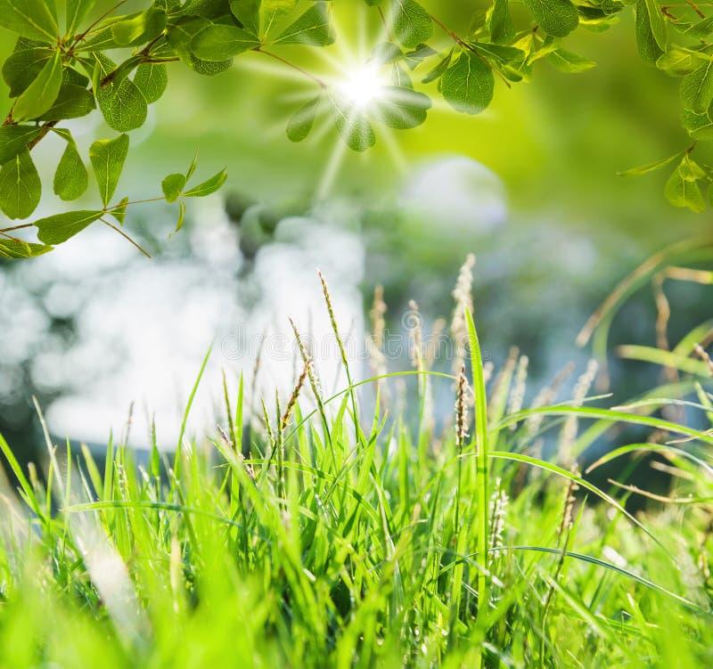 与被弄脏的轻的bokeh的绿色树 库存图片