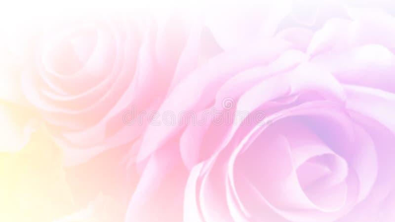 与被弄脏的滤色器的抽象软的粉红彩笔玫瑰作为bac 免版税库存照片