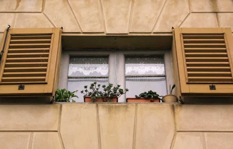 与被打开的树荫的窗口 库存照片