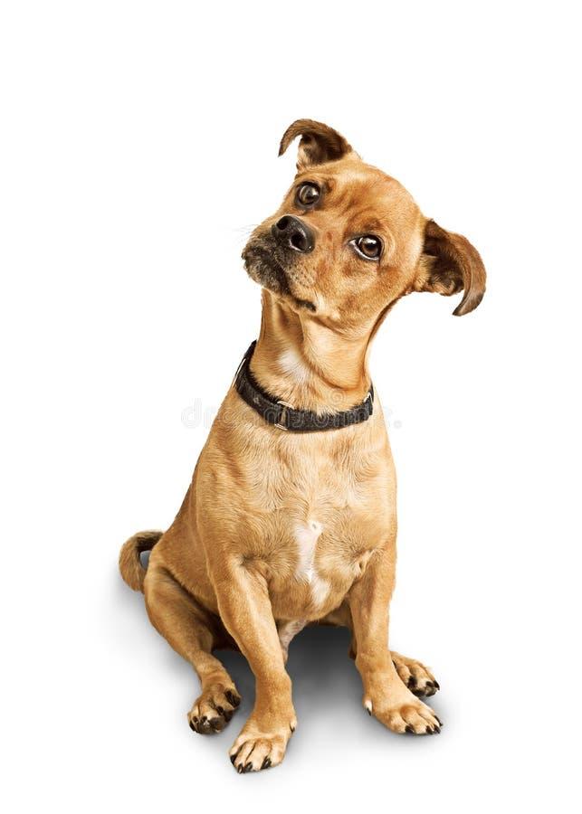 与被掀动的头的狗 图库摄影