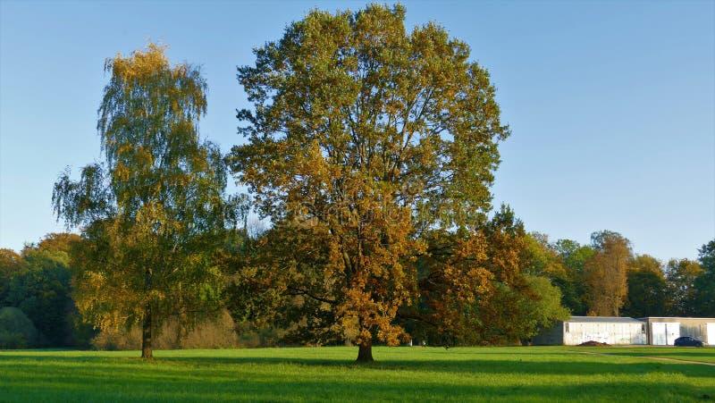 与被染黄的叶子的秋天风景巨大的树 免版税库存图片
