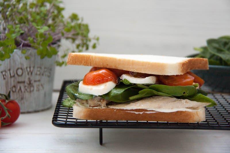 与被烘烤的鸡、蕃茄和无盐干酪的三明治 免版税库存图片