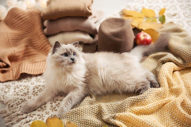 与被编织的毯子的逗人喜爱的猫在地板上在家 库存图片