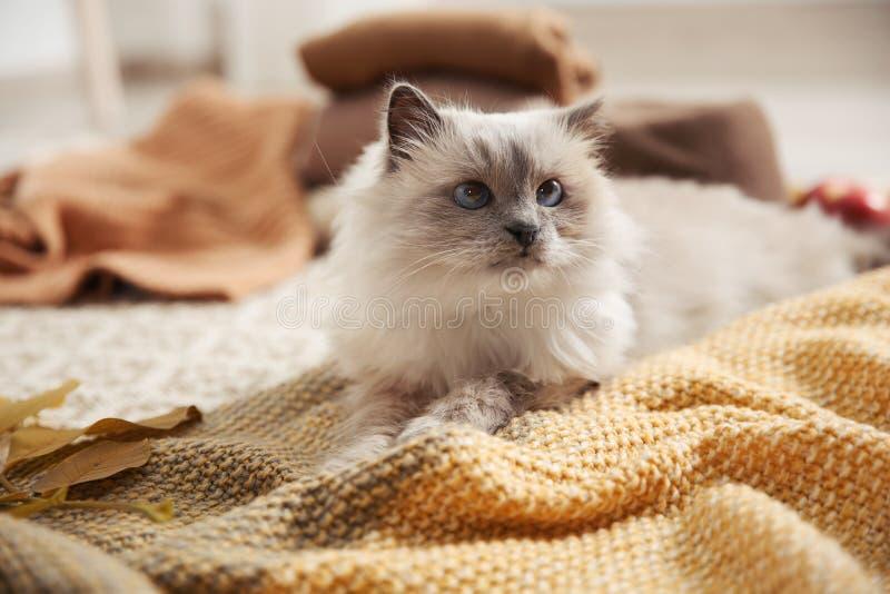 与被编织的毯子的逗人喜爱的猫在地板上 免版税库存图片