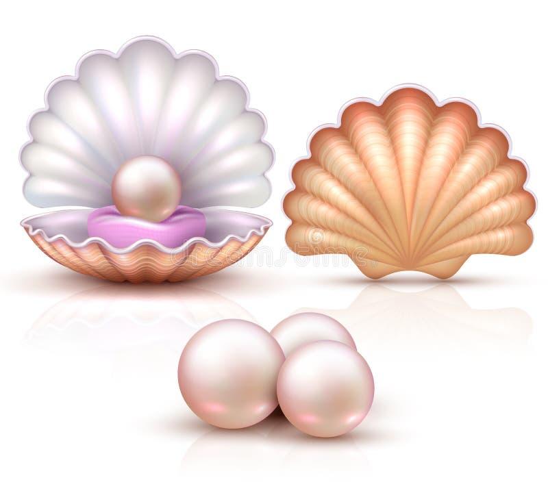 与被隔绝的珍珠的被打开的和被关闭的贝壳 贝类秀丽和豪华概念的传染媒介例证 皇族释放例证