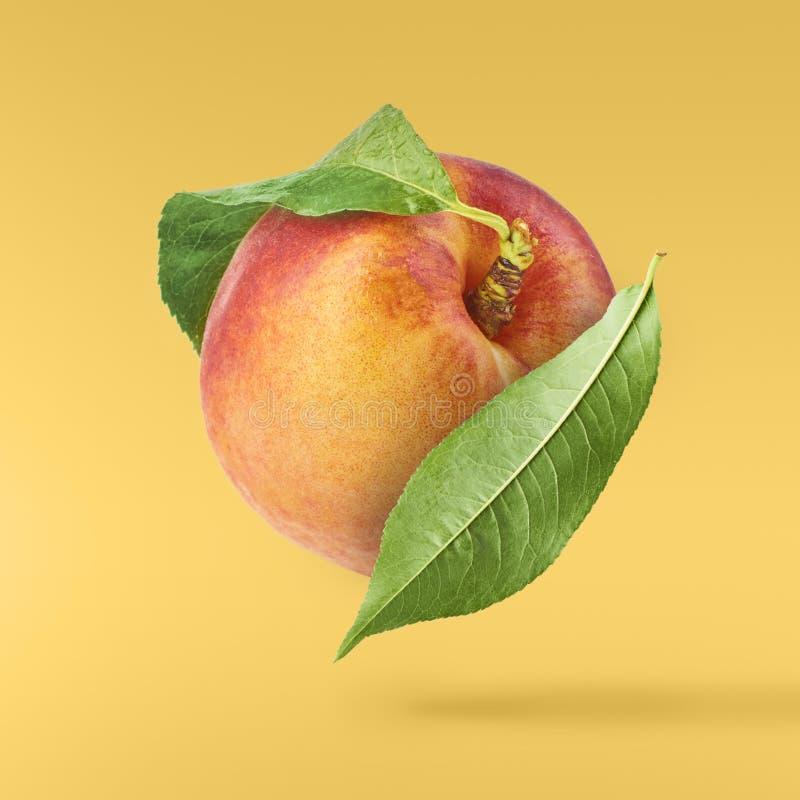 与被隔绝的绿色叶子的飞行的新鲜的成熟桃子 免版税图库摄影