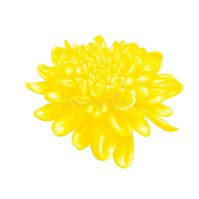 与被隔绝的水彩图画的作用的美丽的黄色大丽花对白色背景 库存图片