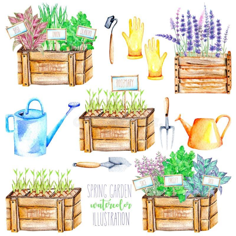 与被隔绝的水彩的一个集合加香料辣草本和园艺工具 皇族释放例证