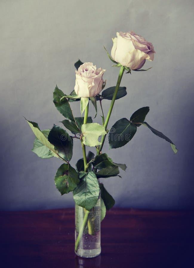 与被洗涤的颜色作用的两朵浪漫桃红色玫瑰 免版税图库摄影