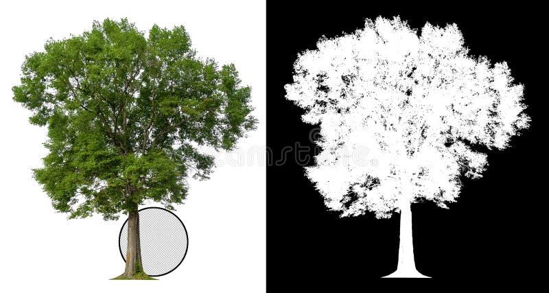 与裁减路线的唯一树 向量例证